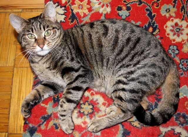 бенгальская кошка в дар москва копию Отделение банка